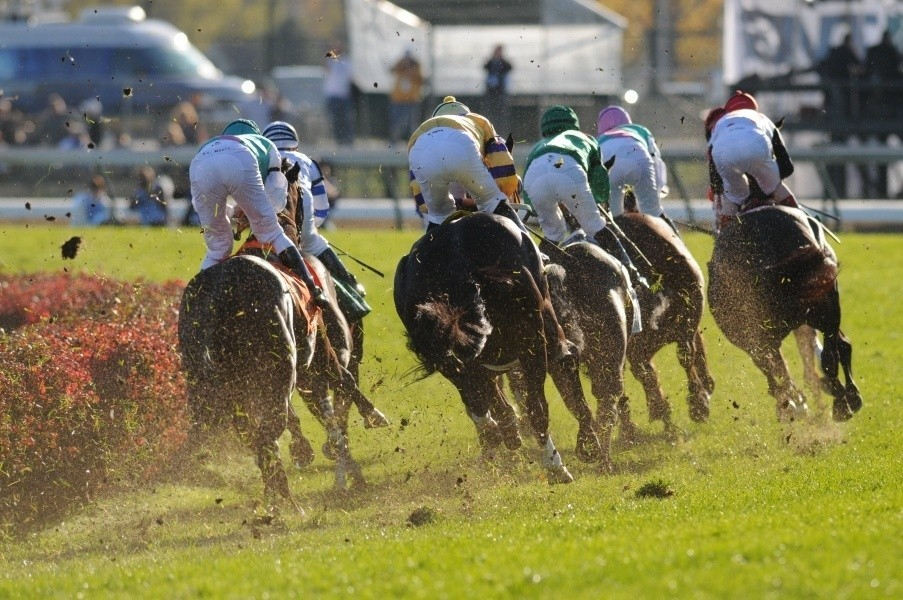 Breeders Cup Race